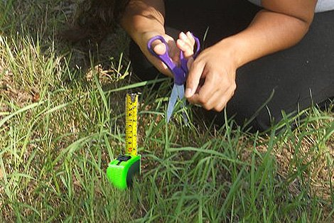 Perfectionism - Measuring Grass Blade