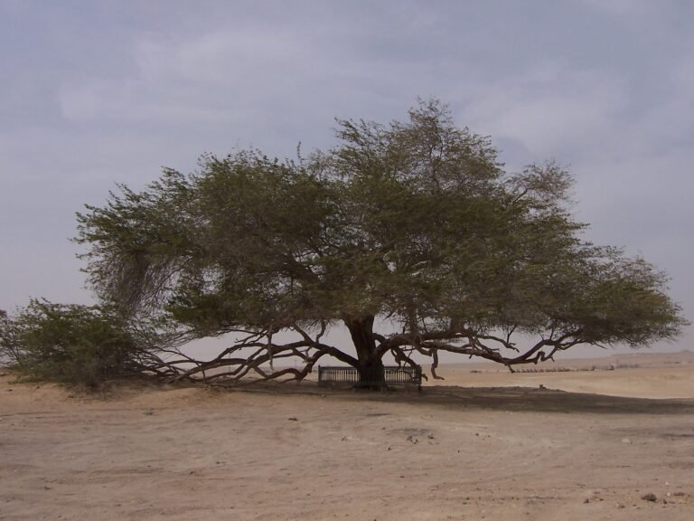Lone tree in sany plain